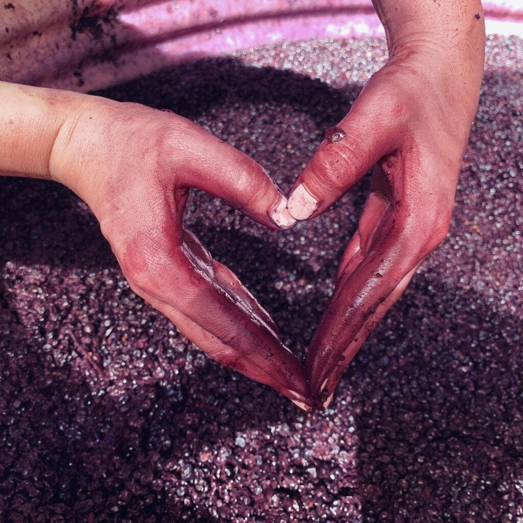 Wine Making Process McLaren Vale Red Wine Fermenting