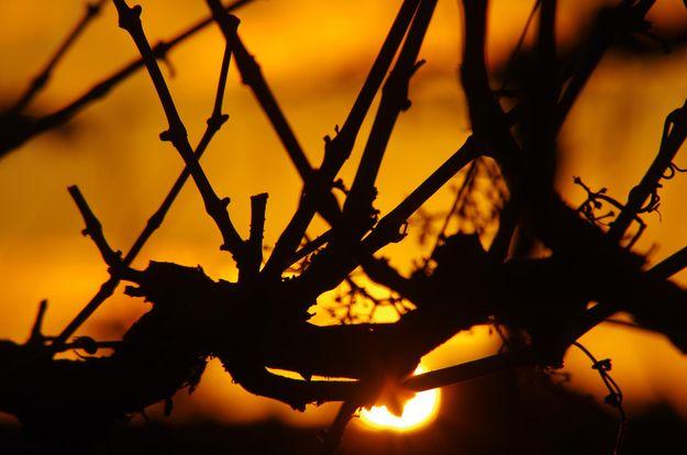 H&L McLaren Vale Winery Vineyard at Sunset
